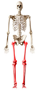Image: Graphic of skeleton with lower extremities highlighted.