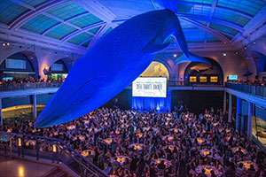Image - Overhead view of the tribute dinner inside the Whale Room at the American Museum of Natural History