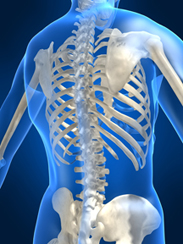 Skeleton 3-D drawing of the human back, Osteoporosis prevention
