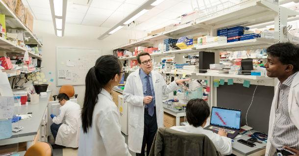 The lab of Lionel Ivashkiv
